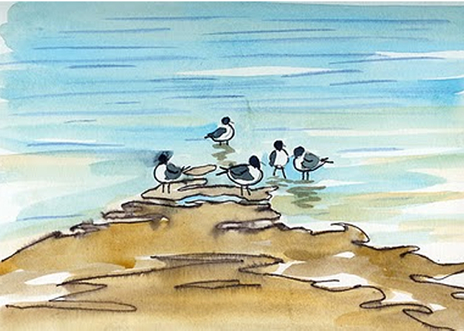 "Color Sketch for Painting of Shorebirds ""Laughing Gull"""