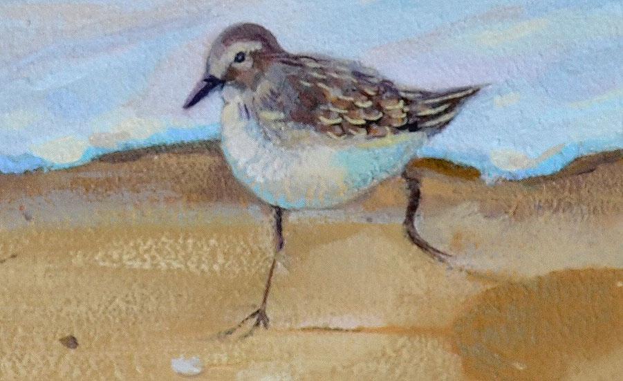 Sandpiper Birds Oil Painting 4th Update