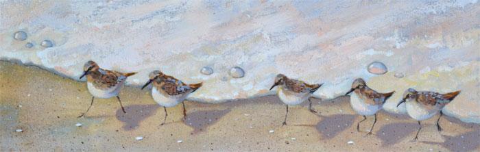 beach birds running along the sand