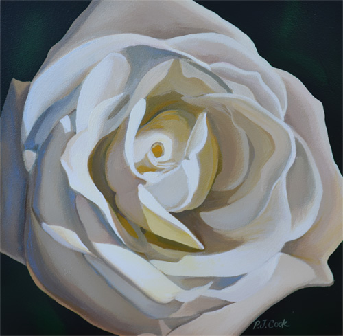White Rose Flower Closeup