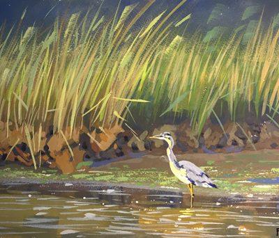 greatblue-heron-gouache-painting-b